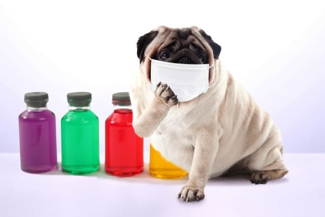 風邪を引いた犬