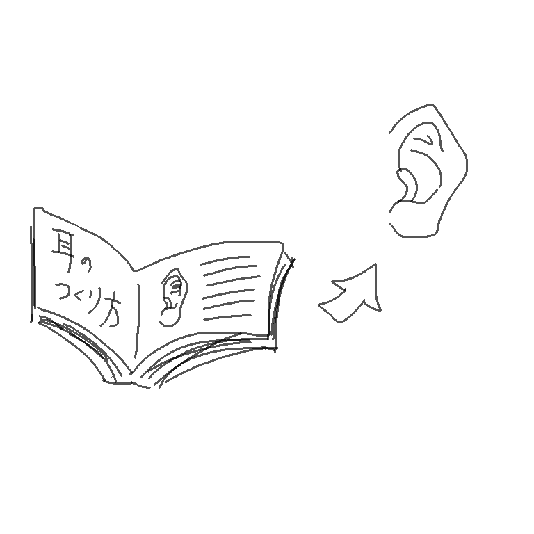 耳をつくる細胞